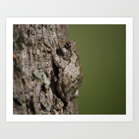Gray Tree Frog Art Print