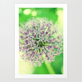 Allium christophii Art Print