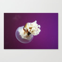 Jellyfish in Purple Canvas Print