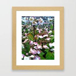 Hydrangea collection III Framed Art Print