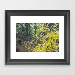 A Splay of Fall Leaves on a Forest Trail Framed Art Print