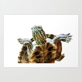 Small red-eared turtle in aquarium Art Print