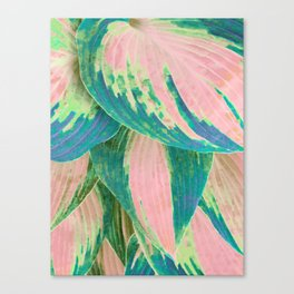 Hosta Multicolor Canvas Print