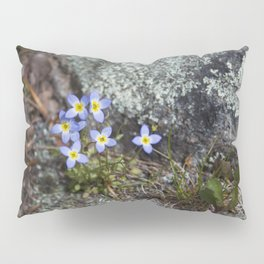 Thyme Leaved Bluets #2 Pillow Sham