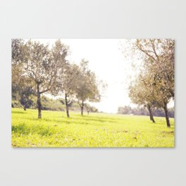 Olive trees heaven - Israel Canvas Print