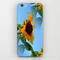 sunflowers iPhone & iPod Skins featuring Sunflowers by Sartoris ART