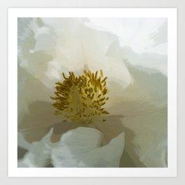 Paeonia White Grace2 Art Print