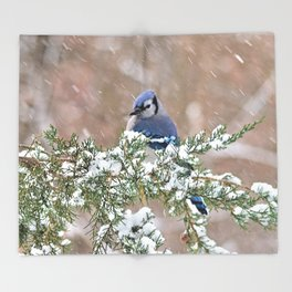 Winter Has Arrived (Blue Jay) Throw Blanket