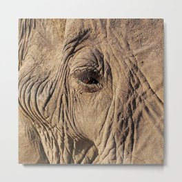Elephant Eyelashes Metal Print