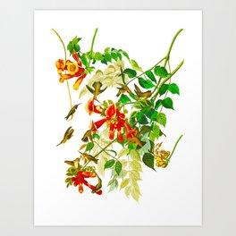 Ruby-throated Humming Bird Art Print