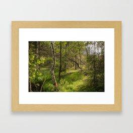 Swedish Nature | Forest | Tyresta Framed Art Print