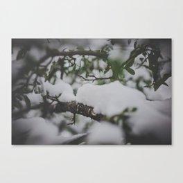_DSC7043 Canvas Print