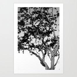 Torote y La Luna Art Print