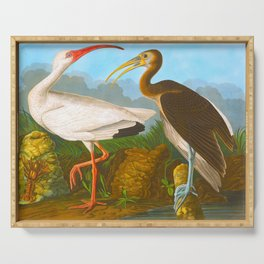 White Ibis John James Audubon Scientific Illustration Birds Of America Drawings Serving Tray