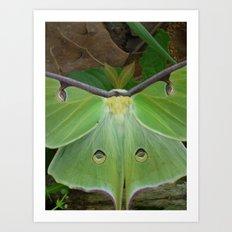 luna moth 2017 Art Print