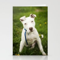 pit bull Stationery Cards featuring Pit Bull Puppy by Kaelyn Ryan Photography