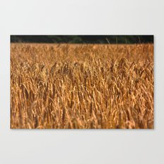 Early Summer Canvas Print