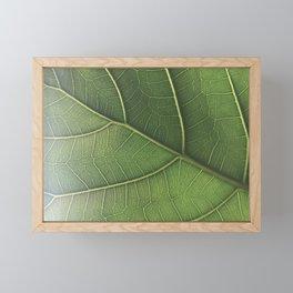Fiddle Fig Framed Mini Art Print