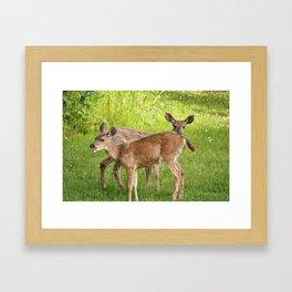 2 cute deer on the lawn Framed Art Print