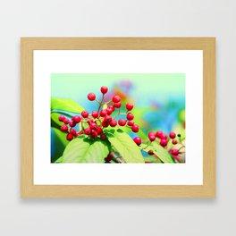 Red autumn berrys Framed Art Print