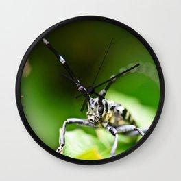 Plectrodera scalator Wall Clock