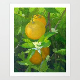 Orange Tree with Oranges and Blossoms Art Print