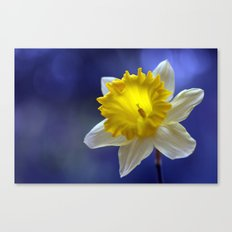 Daffodil in blue 9854 Canvas Print