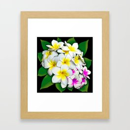 Plumeria Flowers Bouquet Framed Art Print