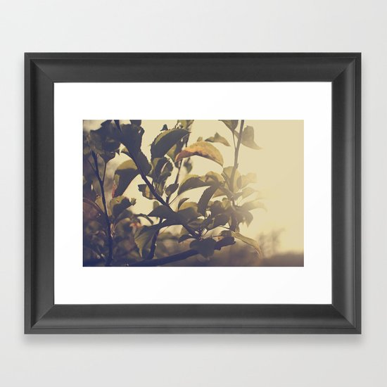 Fall Sun Framed Art Print