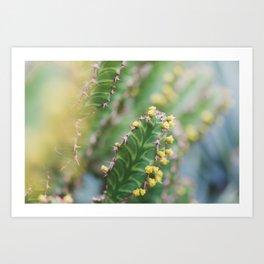 Cactus in Bloom Art Print