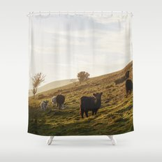 Cattle grazing on mountainside. Derbyshire, UK. Shower Curtain