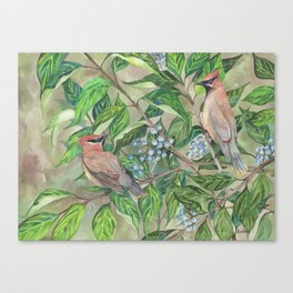 Cedar Waxwings bird and berries Canvas Print