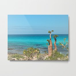 Unique Desert Rose Tree by the Sea, Socotra Island Metal Print