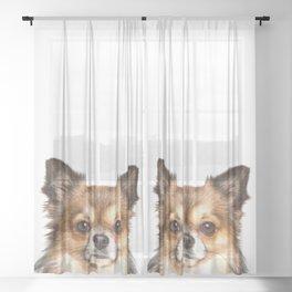 Chihuahua Portrait Sheer Curtain