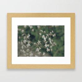 summergrass - three Framed Art Print