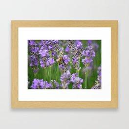 The Bee Framed Art Print