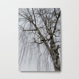 One birch on a gray day Metal Print