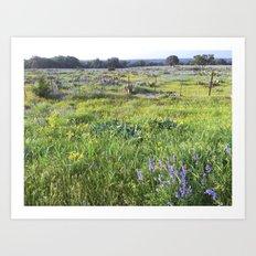 Hill Country Art Print
