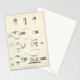 Vintage Scientific Print - 1824 - Dytiscus circomflexus Beetle Anatomy Stationery Cards
