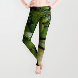 nature and greenery 17 Leggings