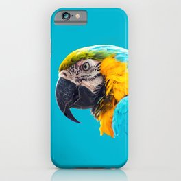 Macaw portrait on a turquoise background iPhone Case