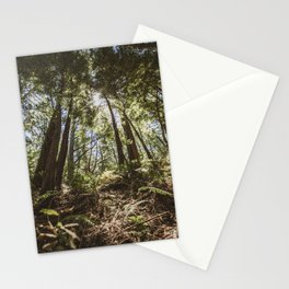 Muir Woods Stationery Cards
