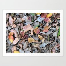 Leaves On The Ground Art Print