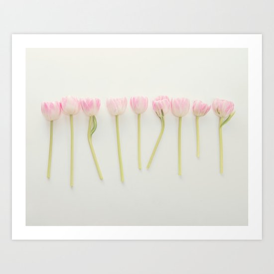 tulip study no. 2 Art Print