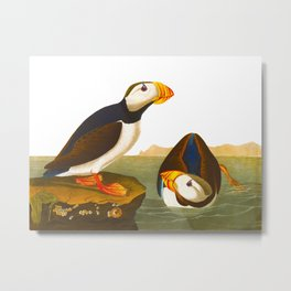 Large billed Puffin Metal Print