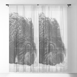 Alaskan Grizzly Bear in Snow, B & W - 2 Sheer Curtain