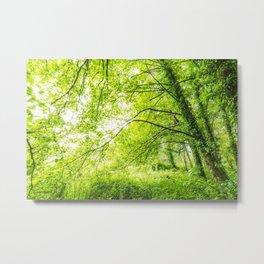 Wild nature parks I - Nature Fine Art photography Metal Print