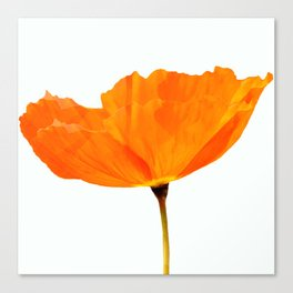One And Only - Orange Poppy White Background #decor #society6 #buyart Canvas Print