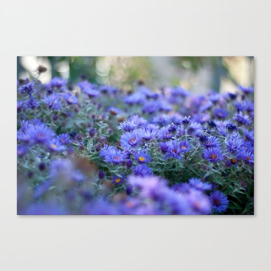 Sea of Asters Canvas Print