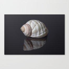 Seashell snail reflection Canvas Print